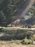 2017 September    Morning vistor Estes Park