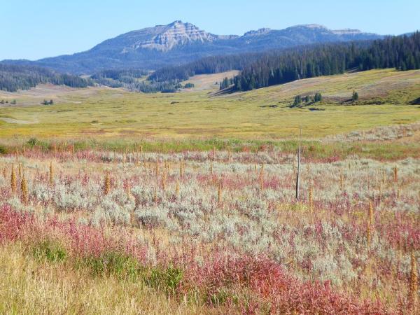 Yellowstone Prairie