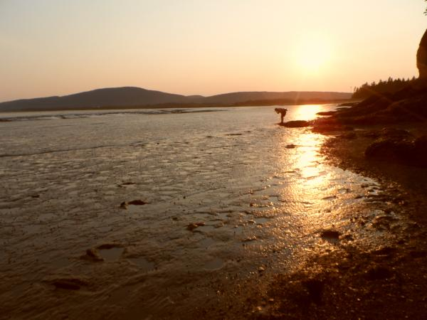 Sunset over the mud flats on the Bay of Fundy, near Hopewell Rocks.